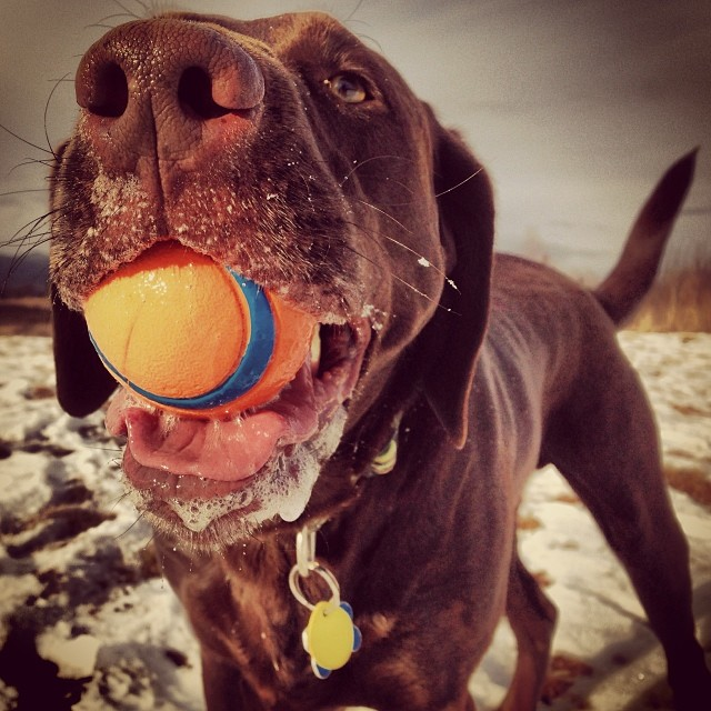 Gilly never lacks for personality, especially if he has a ball