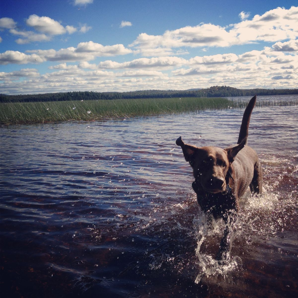Gilly enjoying a summer day on Lake Lila