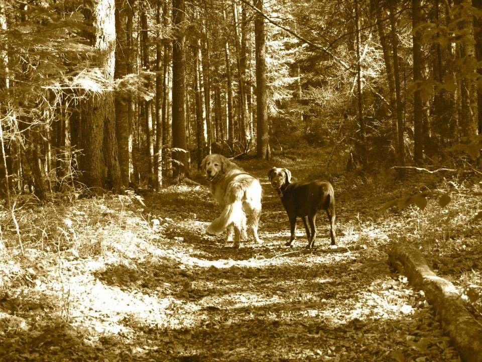 Gilly, right, and his buddy, Jack, right, head down the Deer Pond Loop trail.