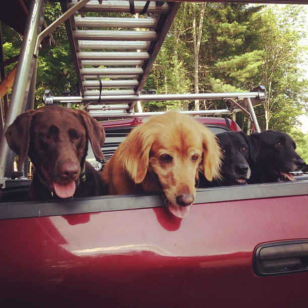 Gilly and his friends, Fenway, Misty, and Tessie, are always up for an adventure.