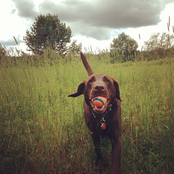 One of Gilly's favorite places to play fetch and to run free is at John Brown Farm in Lake Placid.