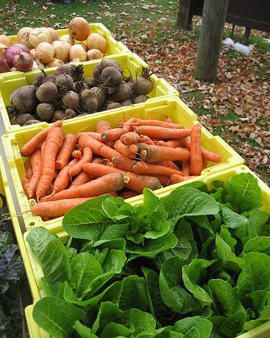 Produce selection from Whitten Farm