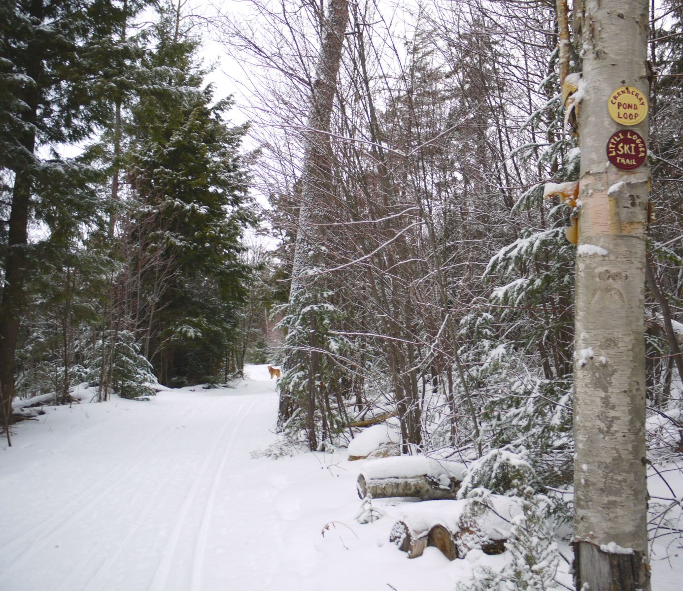Homemade markers are set up throughout the trail network.