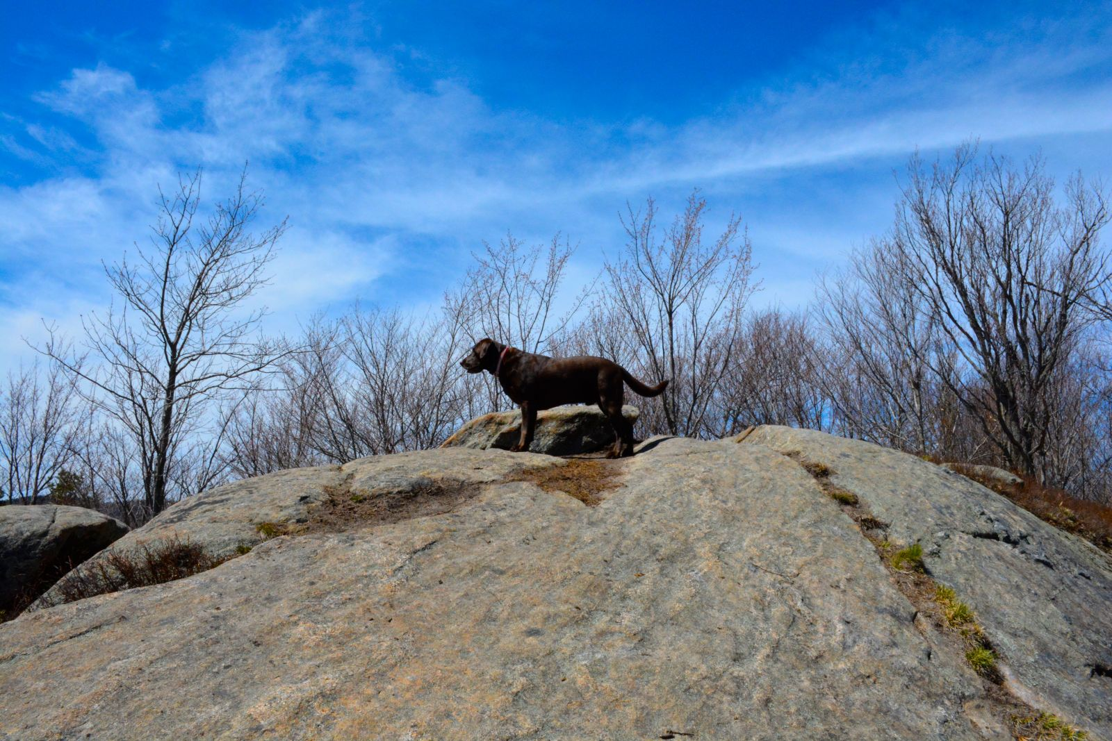 The summit is a fun place to explore for dogs of all sizes.
