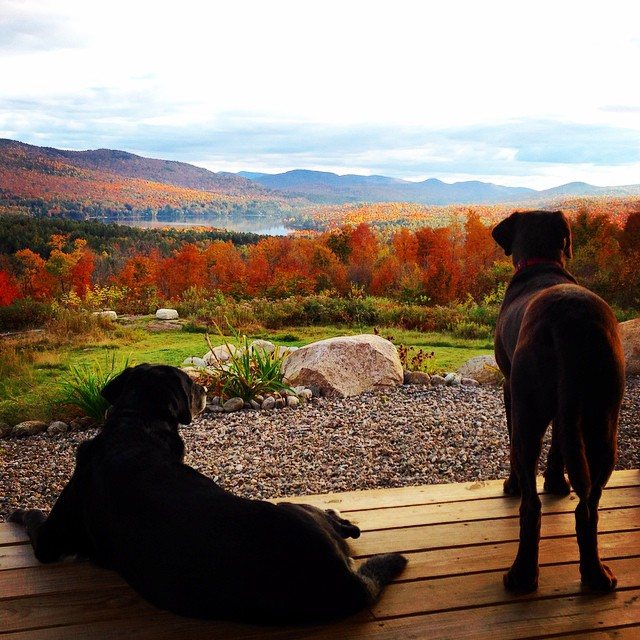 Gilly, right, and his pal Misty, left, soak up the fabulous fall foliage.