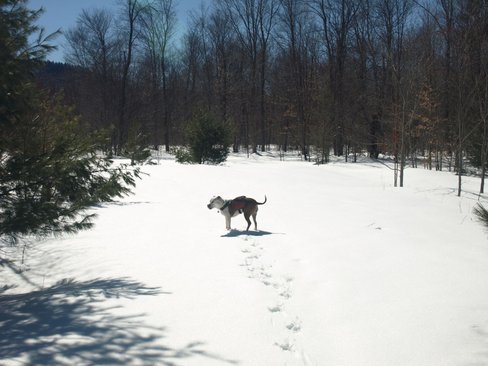 Abby along the carriage road sporting here new pack