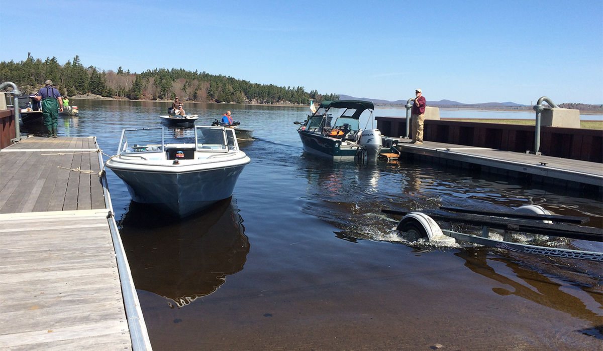 Boats gather at the boat launch to help transport the fish out to the lake's deep waters