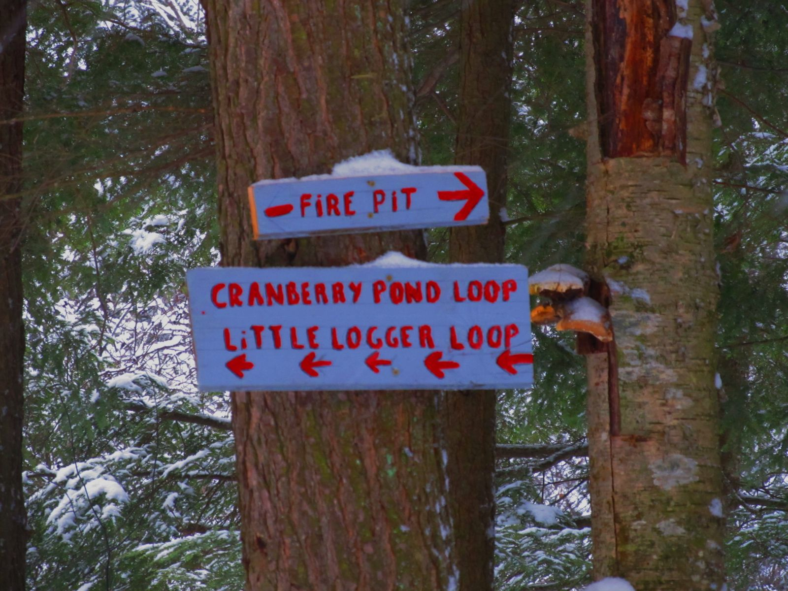 Intersection for Cranberry Pond, the Little Logger Trail or the firepit