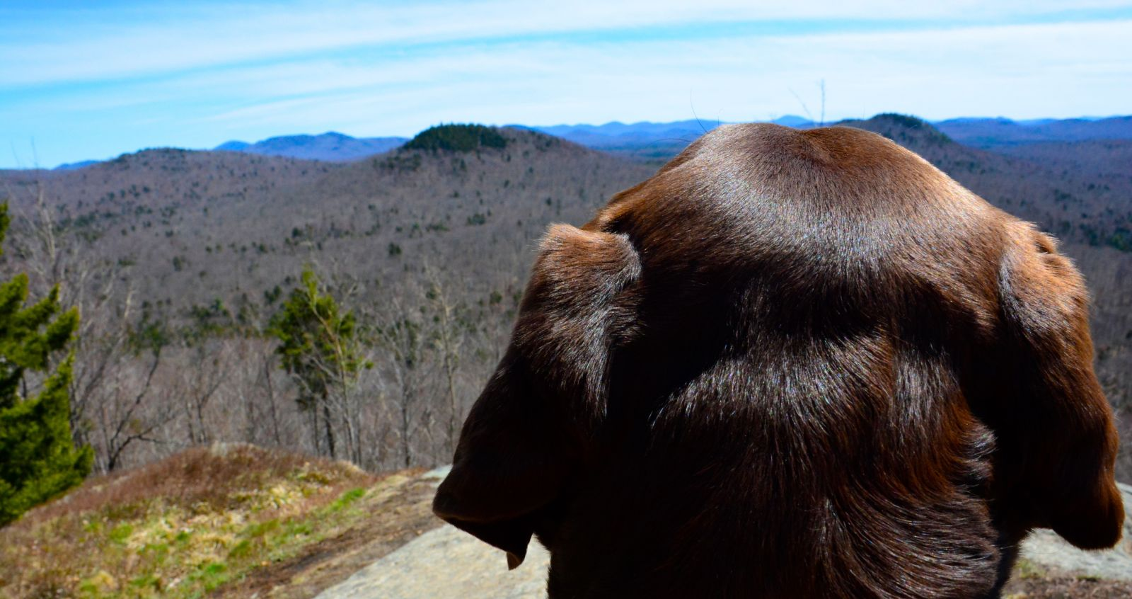 A dog's eye view from the top of Goodman Mountain.