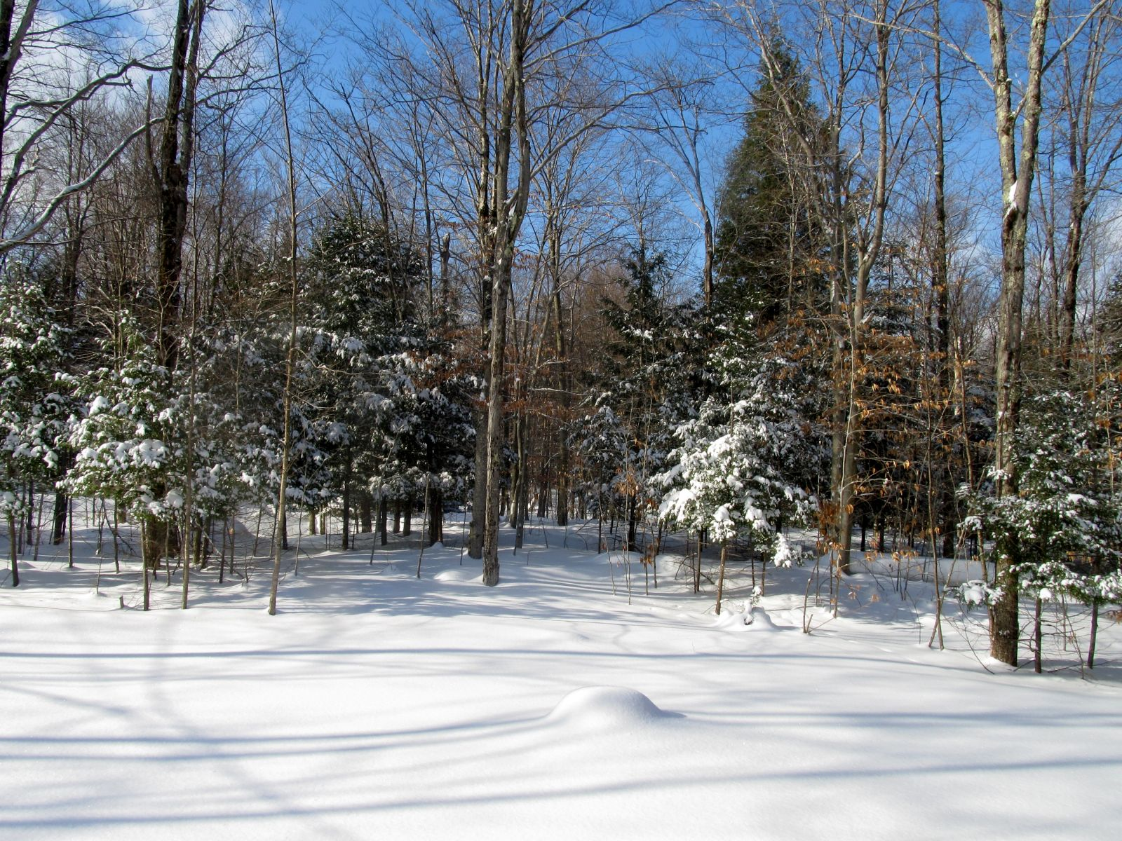 It can be a winter wonderland!