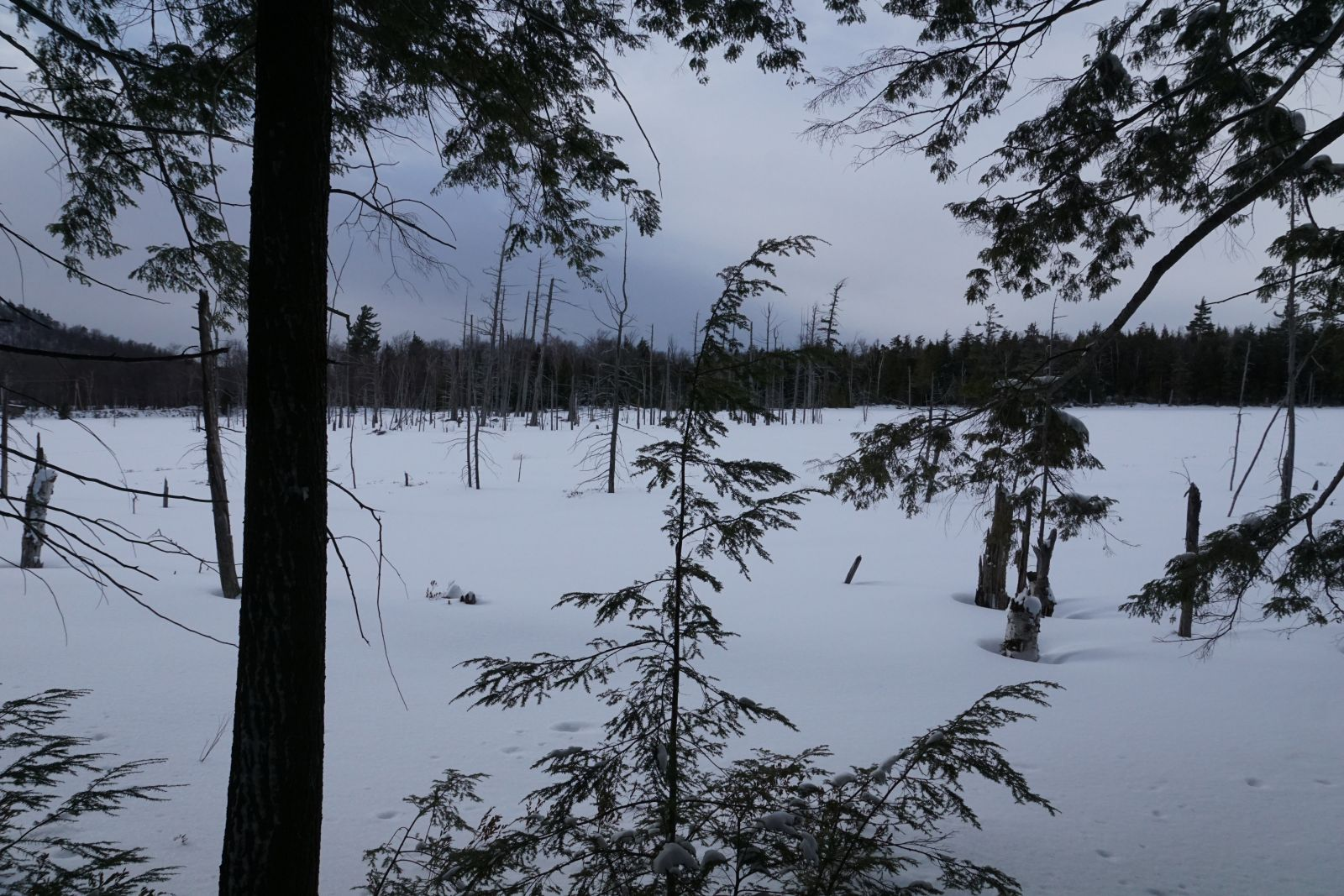 Cranberry Pond is a beautiful little water body.