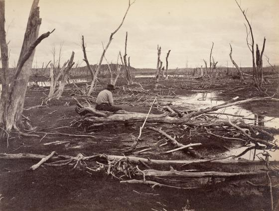 """The Drowned Lands of the Lower Raquette"" is a photograph by Seneca Ray Stoddard taken in 1888."