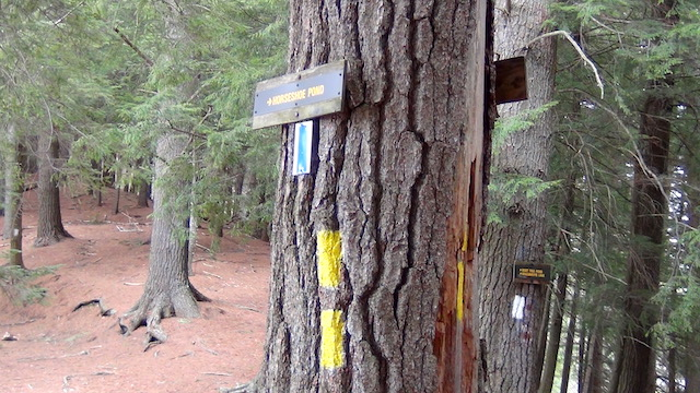 """There are signs and also color """"blazes"""" on trees to help you navigate."""