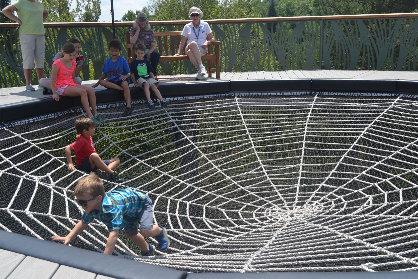 Check out the Spider Web on the Wild Walk!