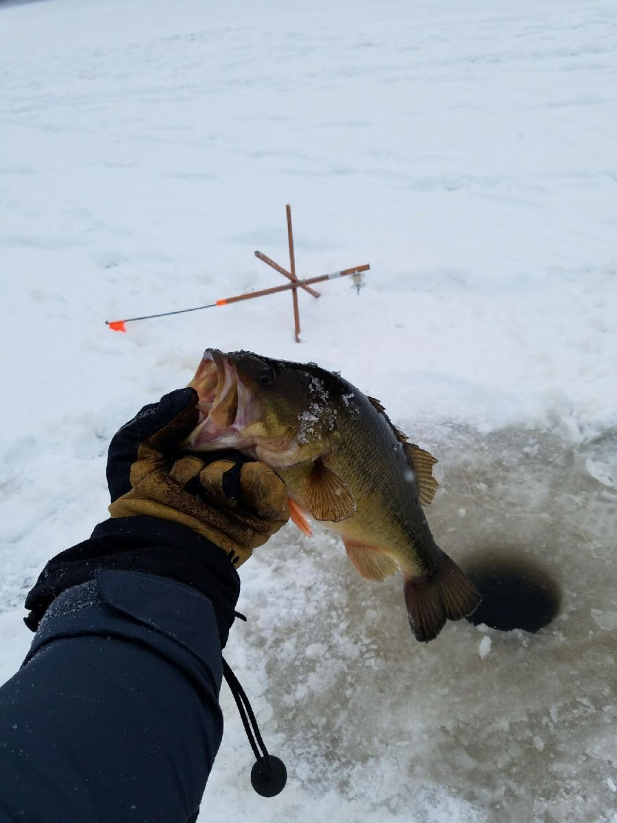 The small mouth bass.