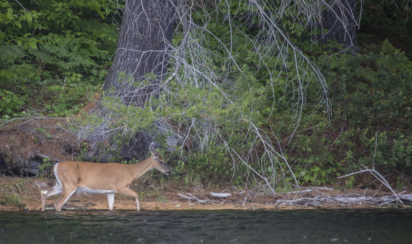 You never know what you will see on a paddling trip!