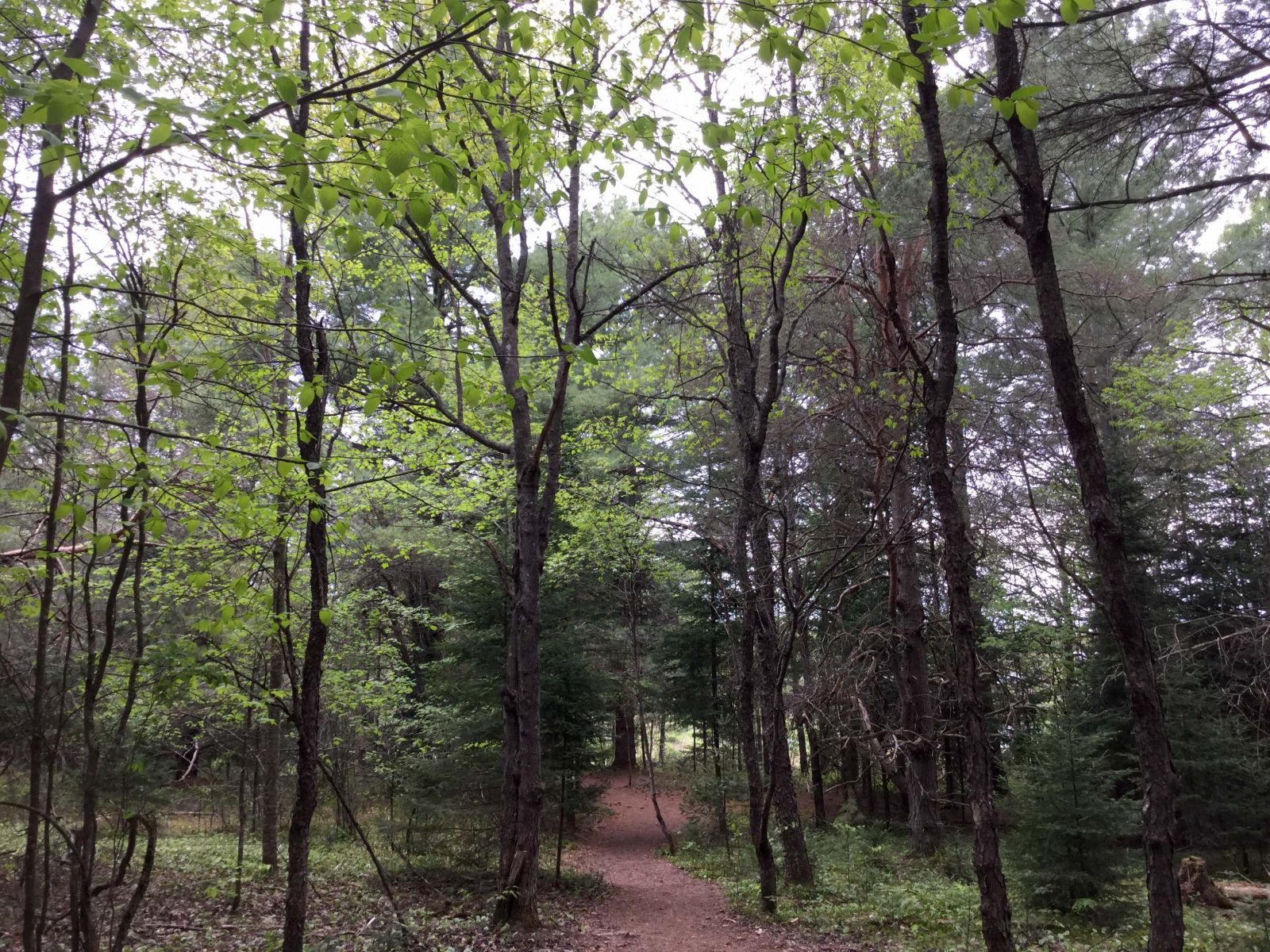 The many shades of new green are a bonus for spring hikers.