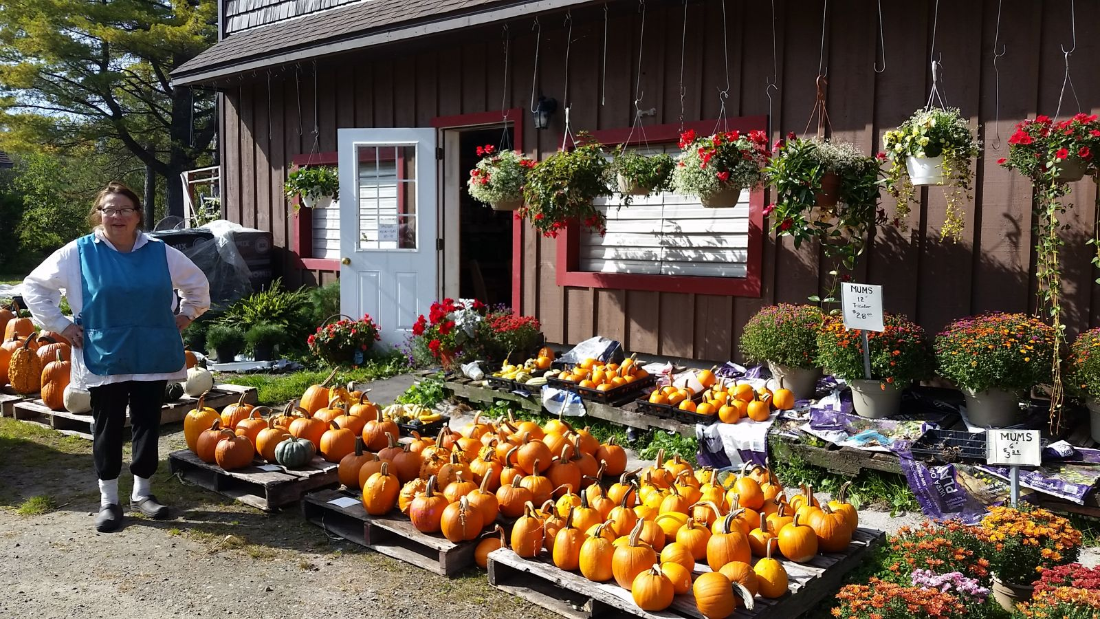 Usher's Farm - pumpkins and mums are ready!