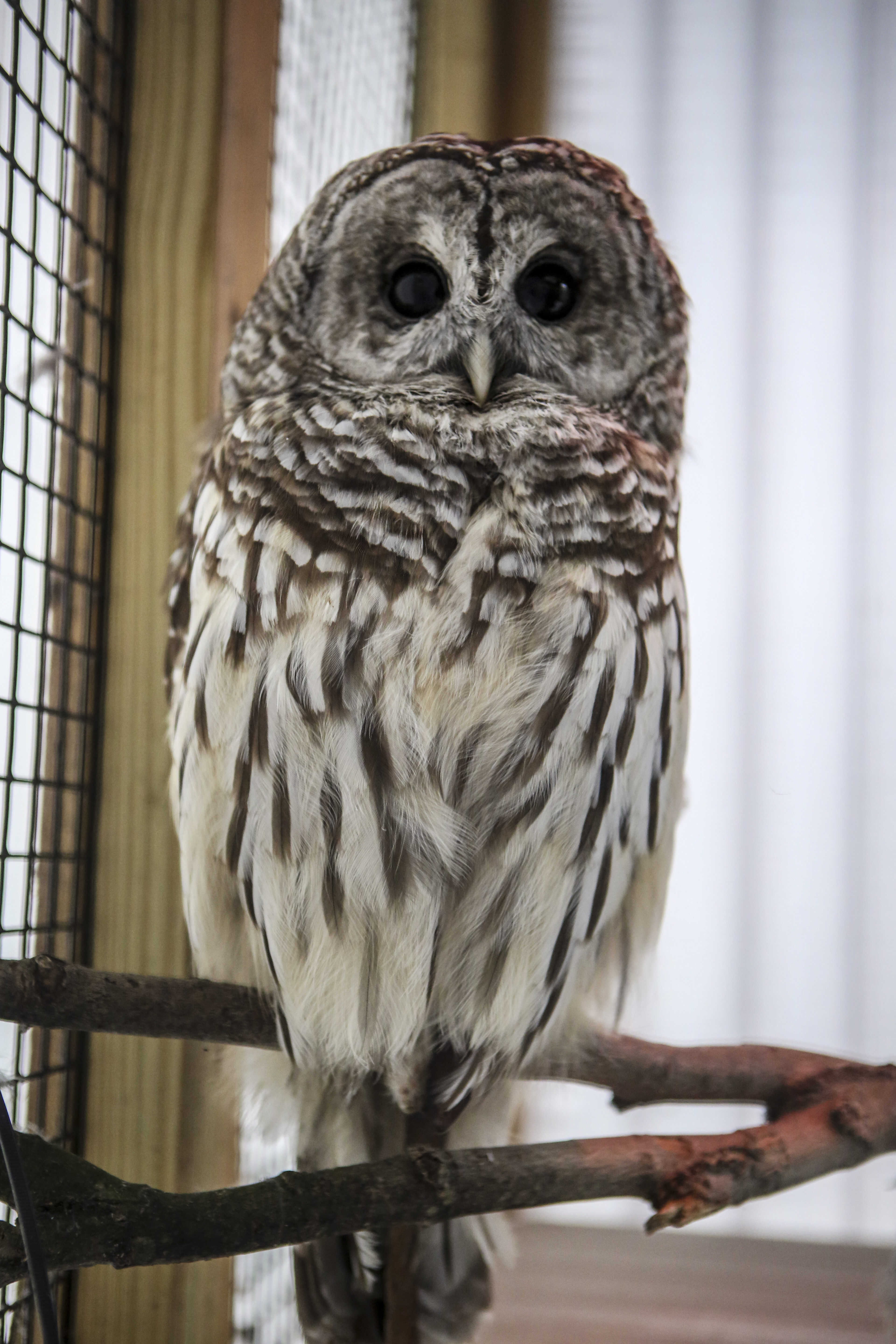 A close-up of an owl. Live animal encounters will happen throughout the day.