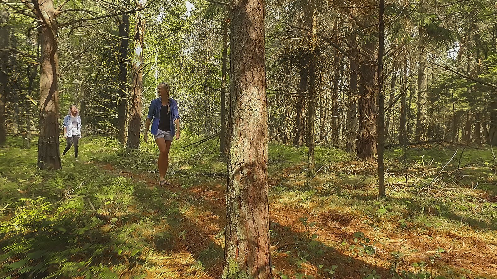 iForest Trail