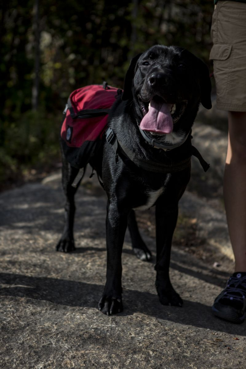 Dogs are welcome on your hike, but Mt. Arab requires them to be on a leash.