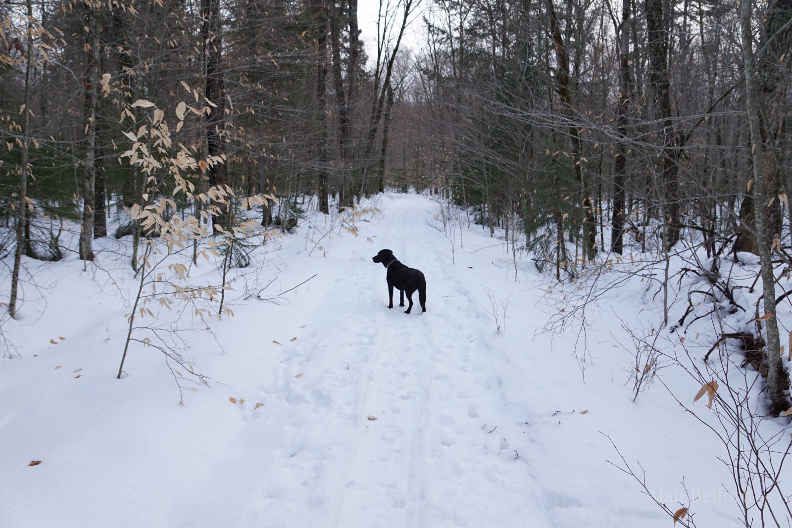 Wren eyes the trail ahead just as we both are anticipating a winter full of snow and skiing adventures.