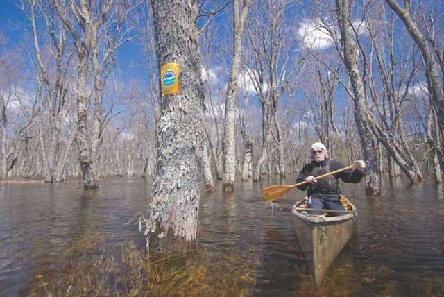 "Gary ""Griz"" Caudle paddling between swamped trees in the Raquette River at high spring water level (note Forest Preserve Wild Forest sign on tree), Franklin Co., Adirondack Park & Forest. (Photo by Mark Bowie, timesunion.com)"
