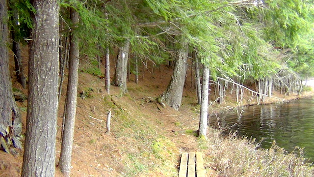 Spring at Massawepie scout these easy hikes | Tupper Lake