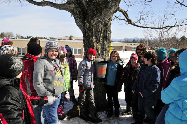 Local schoolchildren tap the trees at their school. Maple trees are everywhere in the Adirondacks.