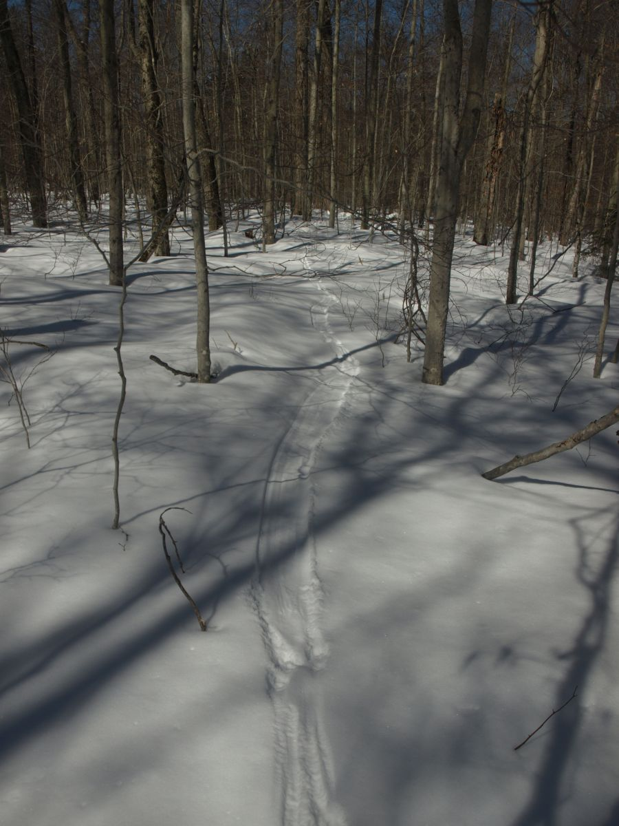 Otter trail and tracks