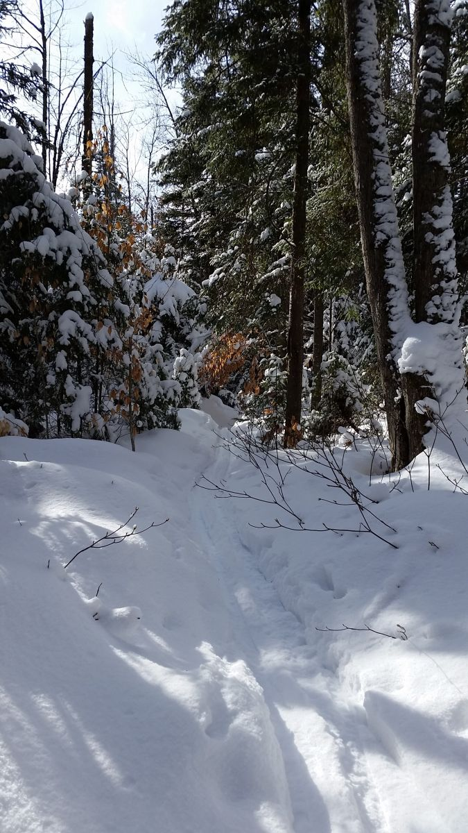 Deer Pond Trail for the advanced skiers!