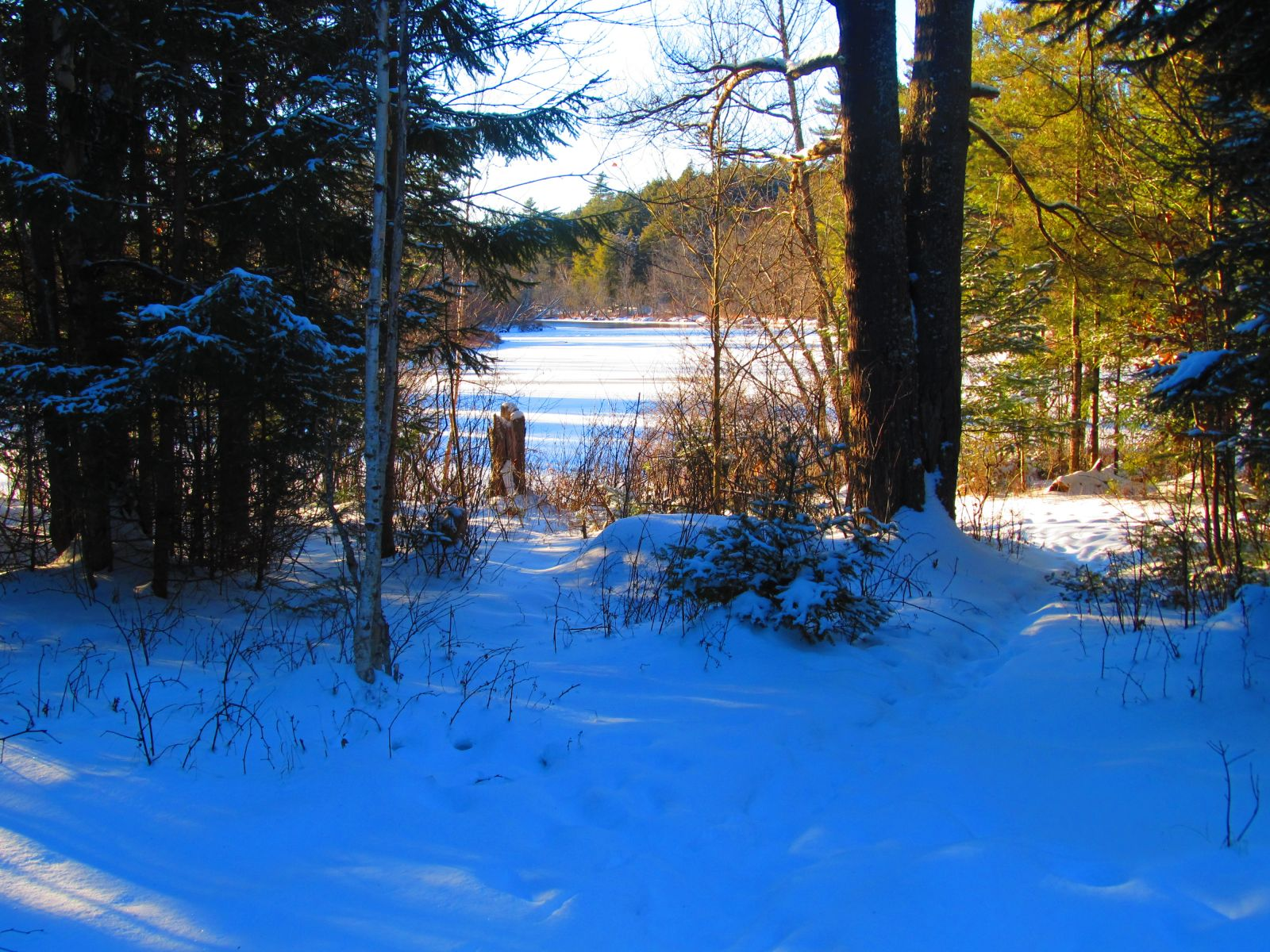View the Raquette River by skiing into Trombley's Clearing