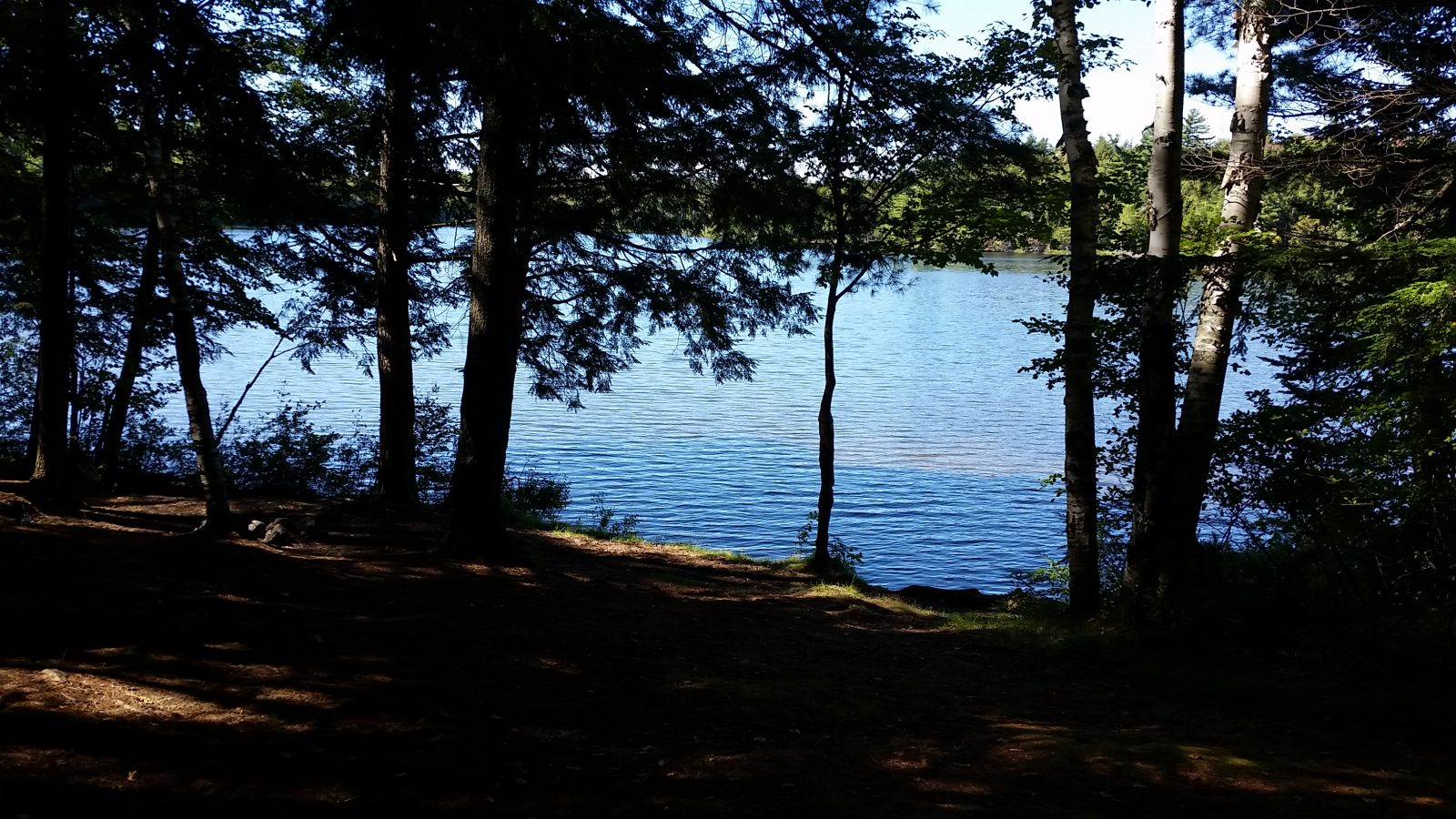 East Pine Pond - perfect picnic area!