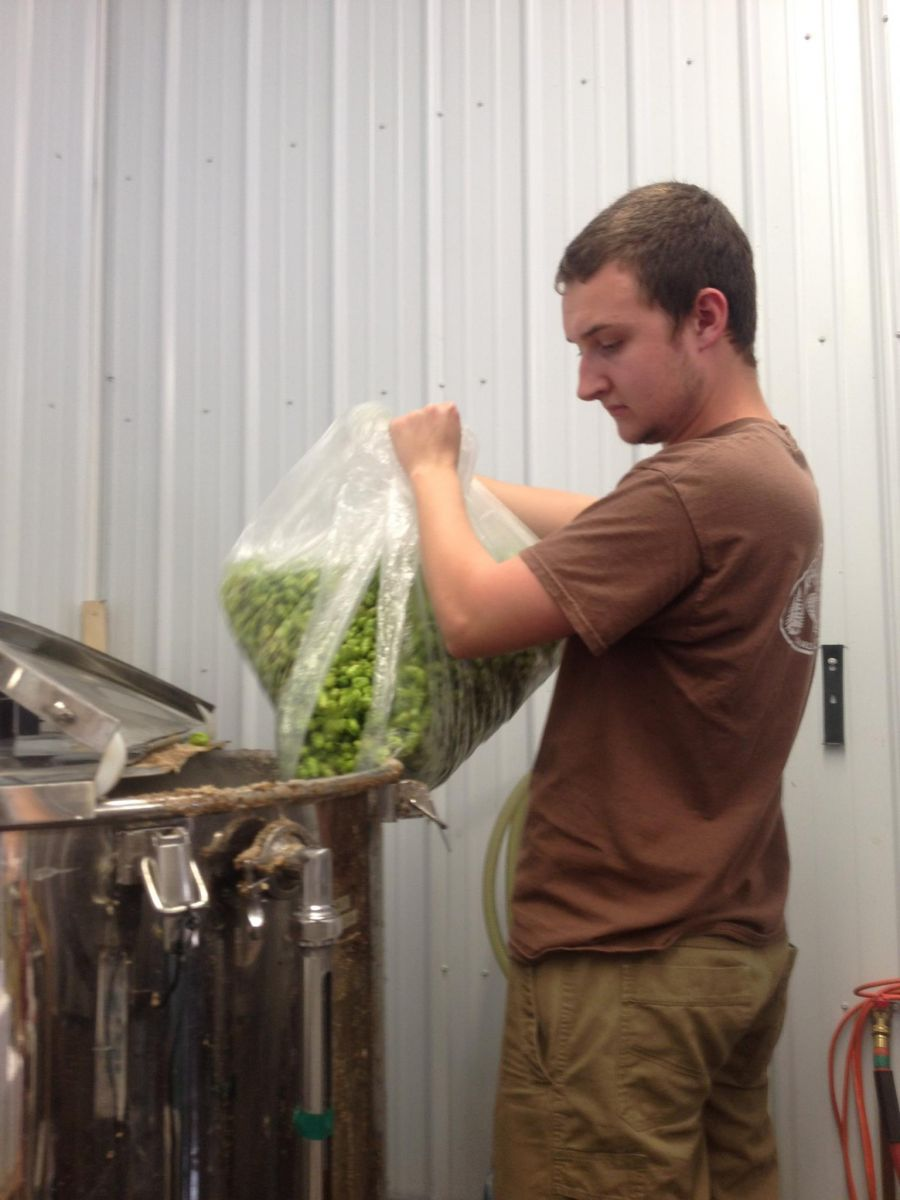 Alexander pouring in the haul of local hops.
